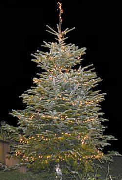 Weihnachtsbaum mit 1000 LEDs